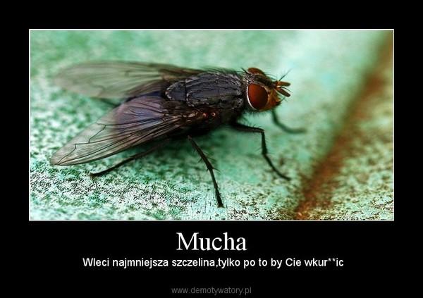Mucha –  Wleci najmniejsza szczelina,tylko po to by Cie wkur**ic
