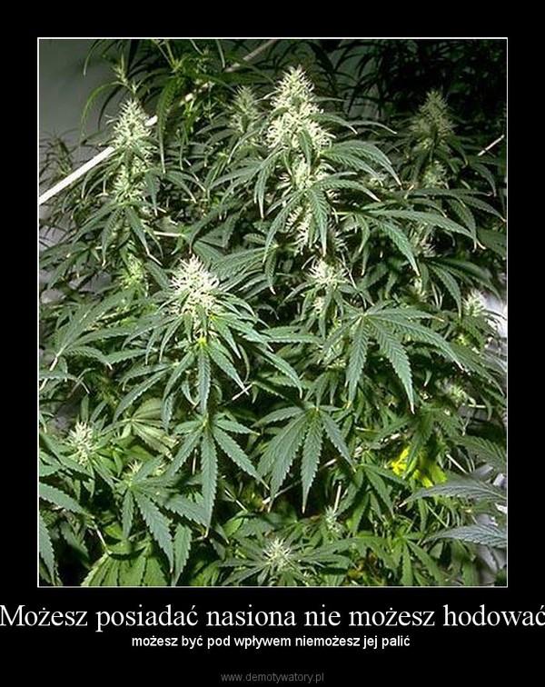 Możesz posiadać nasiona nie możesz hodować – możesz być pod wpływem niemożesz jej palić
