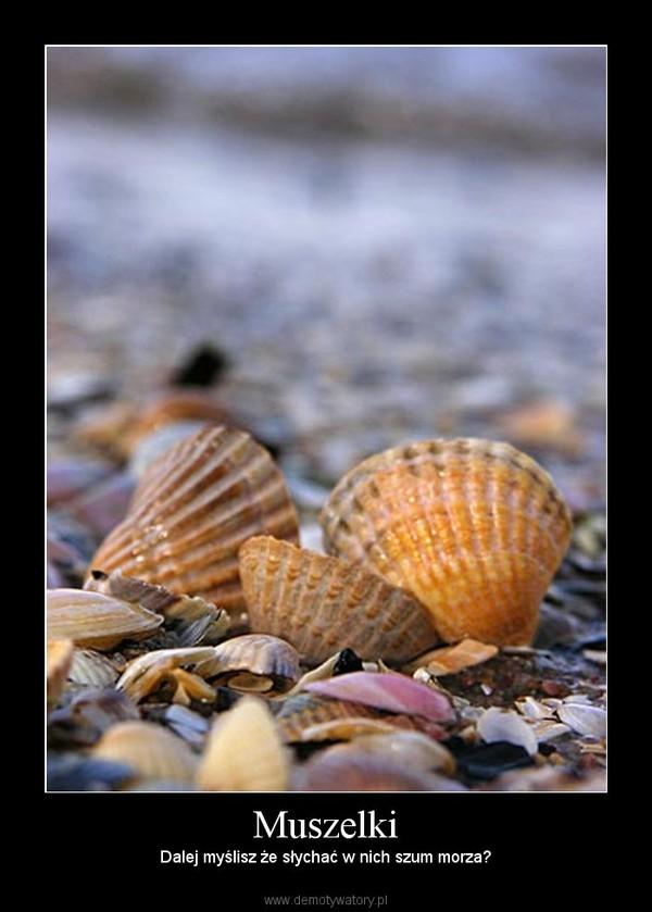 Muszelki – Dalej myślisz że słychać w nich szum morza?