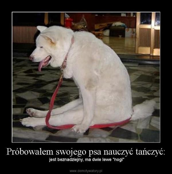 """Próbowałem swojego psa nauczyć tańczyć: –  jest beznadziejny, ma dwie lewe """"nogi"""""""