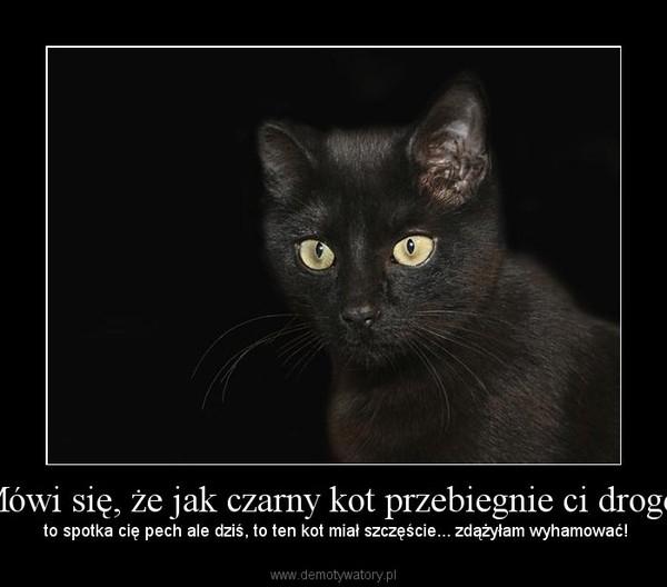 Mówi się, że jak czarny kot przebiegnie ci drogę- – to spotka cię pech ale dziś, to ten kot miał szczęście... zdążyłam wyhamować!