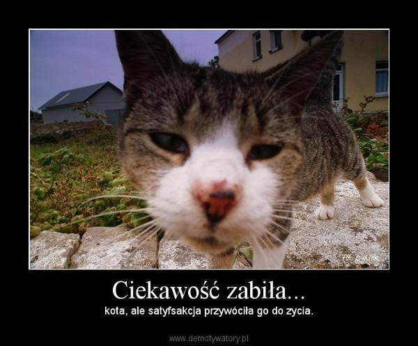 Ciekawość zabiła... – kota, ale satyfsakcja przywóciła go do zycia.