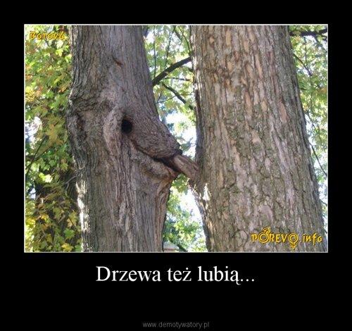 Drzewa też lubią...