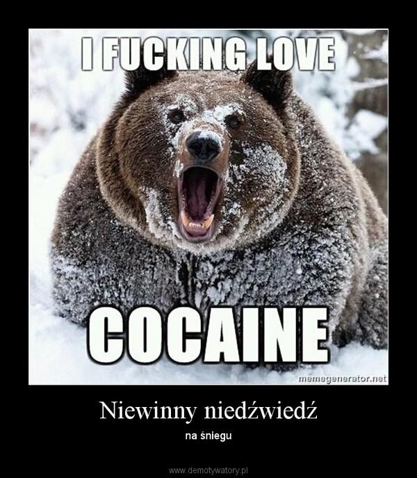 Niewinny niedźwiedź – na śniegu