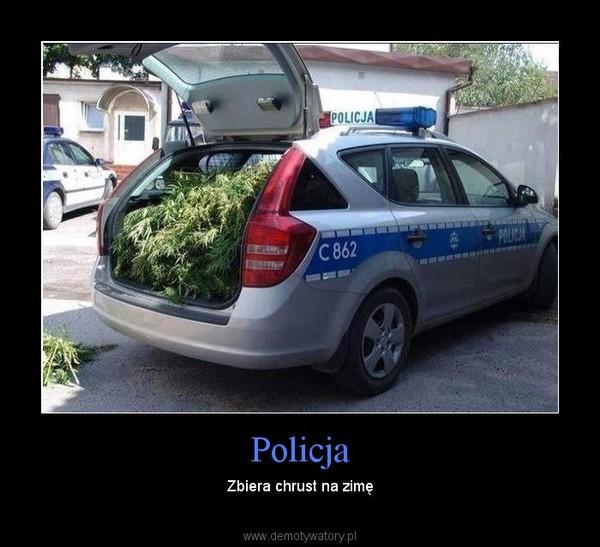 Policja – Zbiera chrust na zimę