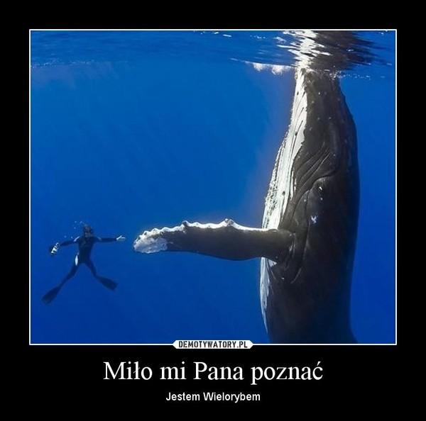 Miło mi Pana poznać – Jestem Wielorybem