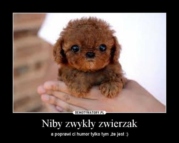 Niby zwykły zwierzak – a poprawi ci humor tylko tym ,że jest :)