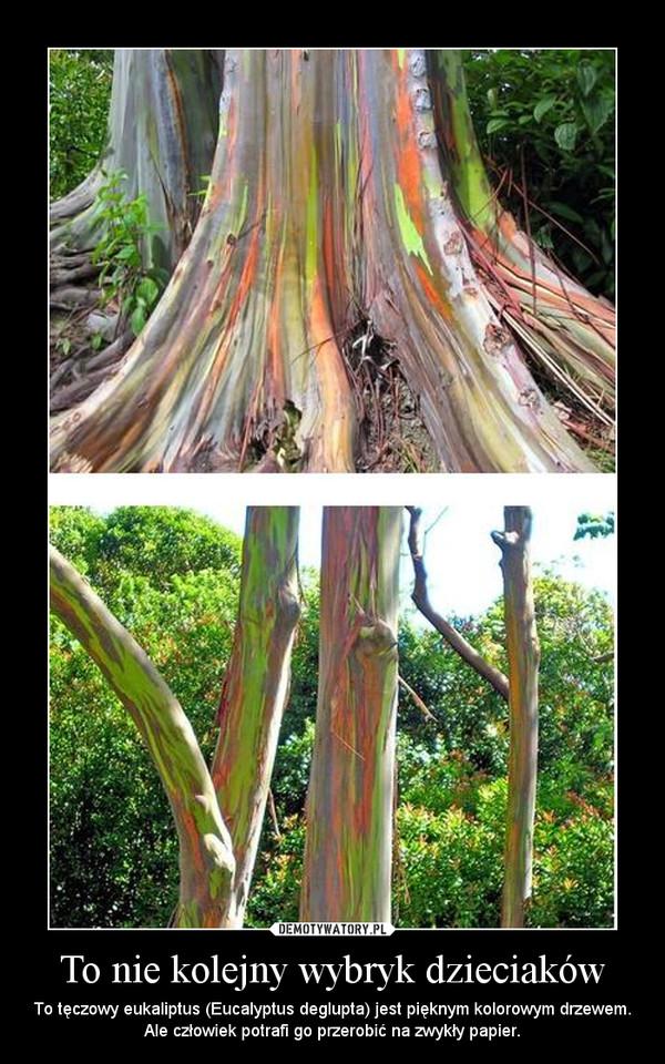 To nie kolejny wybryk dzieciaków – To tęczowy eukaliptus (Eucalyptus deglupta) jest pięknym kolorowym drzewem. Ale człowiek potrafi go przerobić na zwykły papier.