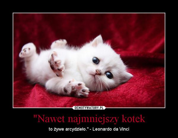 """""""Nawet najmniejszy kotek – to żywe arcydzieło."""" - Leonardo da Vinci"""