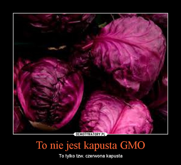 To nie jest kapusta GMO – To tylko tzw. czerwona kapusta