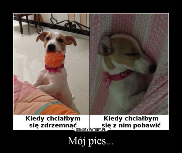 Mój pies... –
