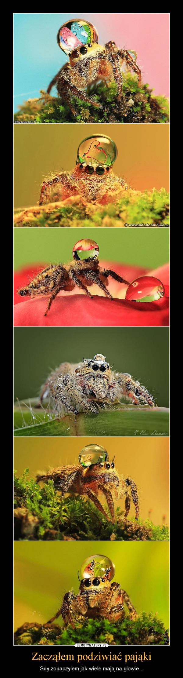 Zacząłem podziwiać pająki – Gdy zobaczyłem jak wiele mają na głowie...