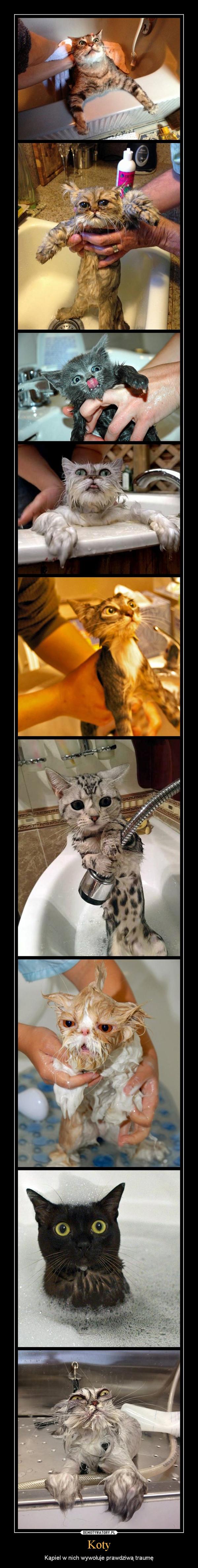 Koty – Kąpiel w nich wywołuje prawdziwą traumę