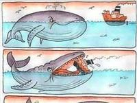 jak duży jest kutas wieloryba