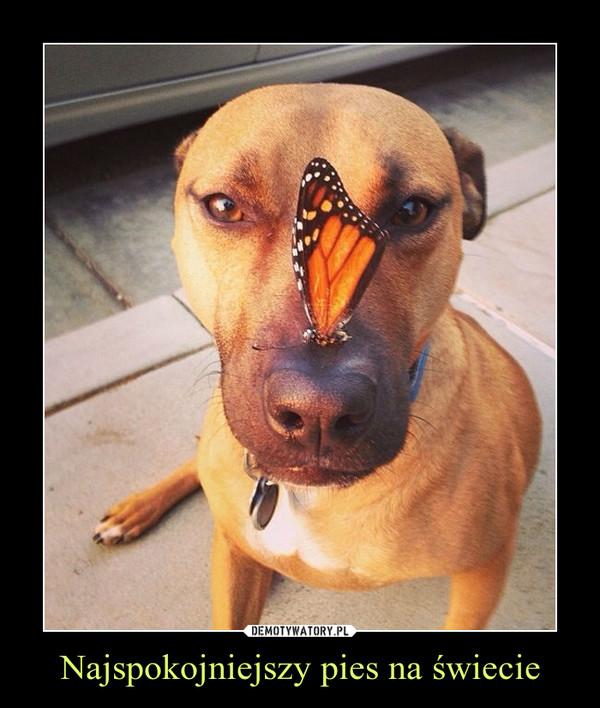 Najspokojniejszy pies na świecie –