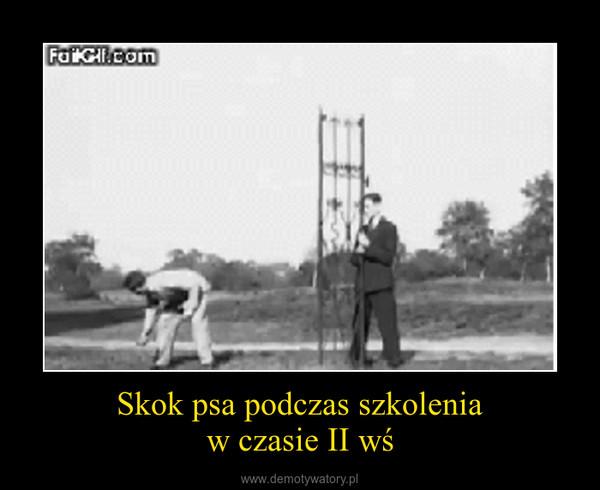 Skok psa podczas szkoleniaw czasie II wś –