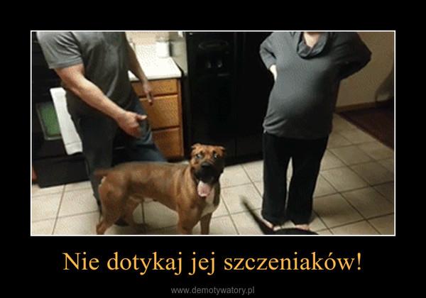 Nie dotykaj jej szczeniaków! –