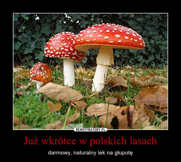 Już wkrótce w polskich lasach – darmowy, naturalny lek na głupotę