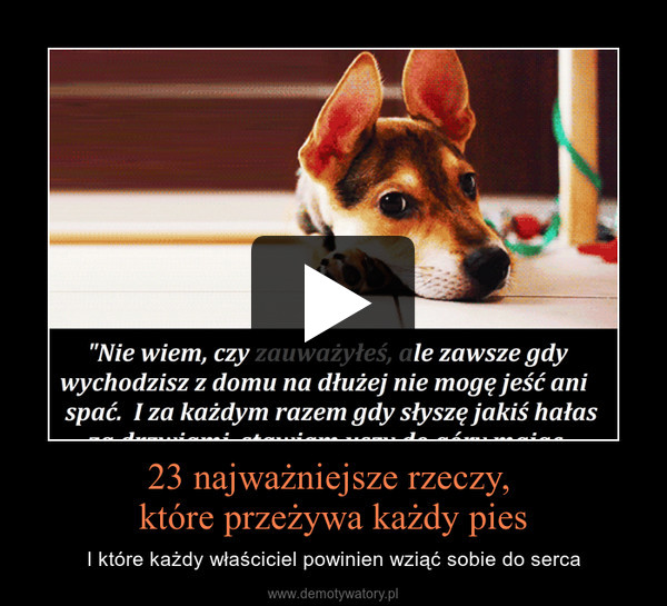 23 najważniejsze rzeczy, które przeżywa każdy pies – I które każdy właściciel powinien wziąć sobie do serca
