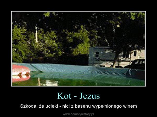Kot - Jezus – Szkoda, że uciekł - nici z basenu wypełnionego winem