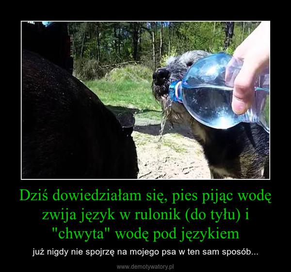 """Dziś dowiedziałam się, pies pijąc wodę zwija język w rulonik (do tyłu) i """"chwyta"""" wodę pod językiem – już nigdy nie spojrzę na mojego psa w ten sam sposób..."""