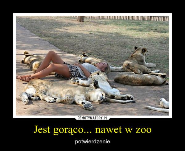 Jest gorąco... nawet w zoo – potwierdzenie