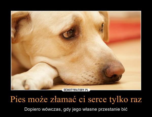 Pies może złamać ci serce tylko raz – Dopiero wówczas, gdy jego własne przestanie bić