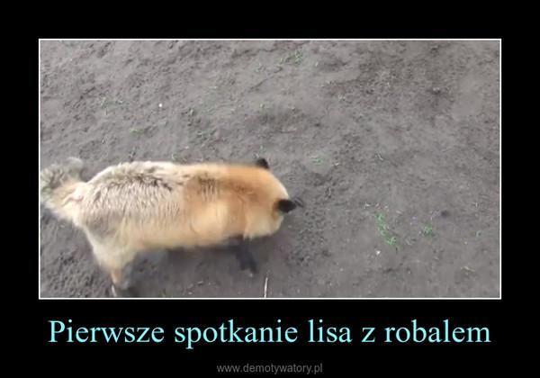 Pierwsze spotkanie lisa z robalem –