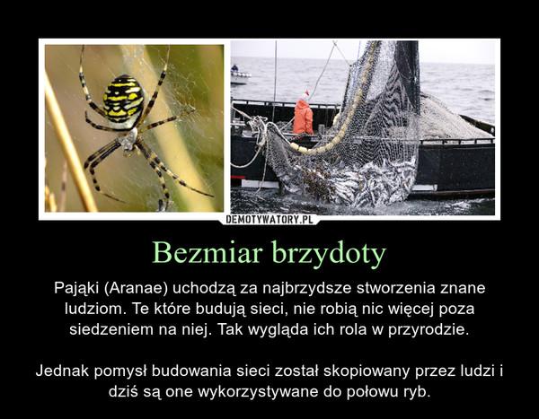Bezmiar brzydoty – Pająki (Aranae) uchodzą za najbrzydsze stworzenia znane ludziom. Te które budują sieci, nie robią nic więcej poza siedzeniem na niej. Tak wygląda ich rola w przyrodzie.Jednak pomysł budowania sieci został skopiowany przez ludzi i dziś są one wykorzystywane do połowu ryb.