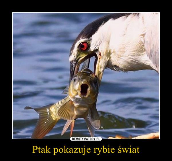 Ptak pokazuje rybie świat –
