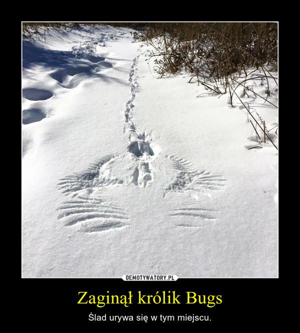 Zaginął królik Bugs – Ślad urywa się w tym miejscu.