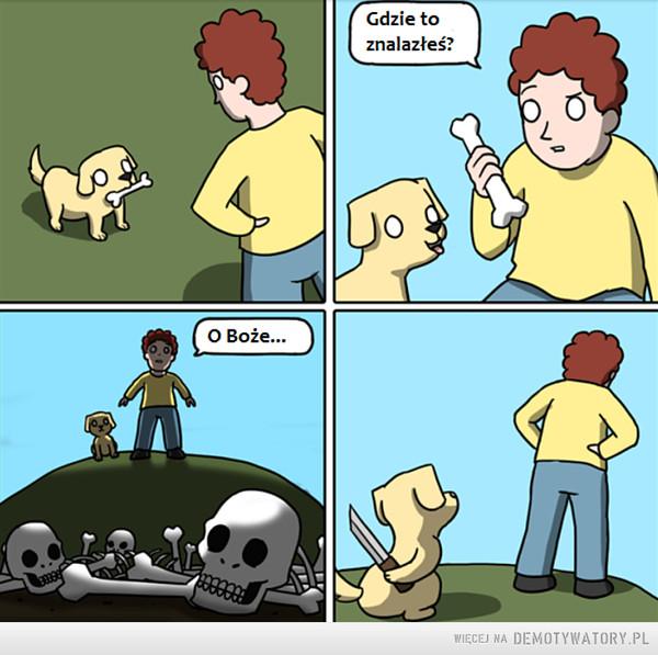 Twój pies też ma swoje uczucia –