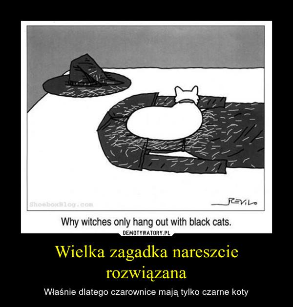 Wielka zagadka nareszcie rozwiązana – Właśnie dlatego czarownice mają tylko czarne koty