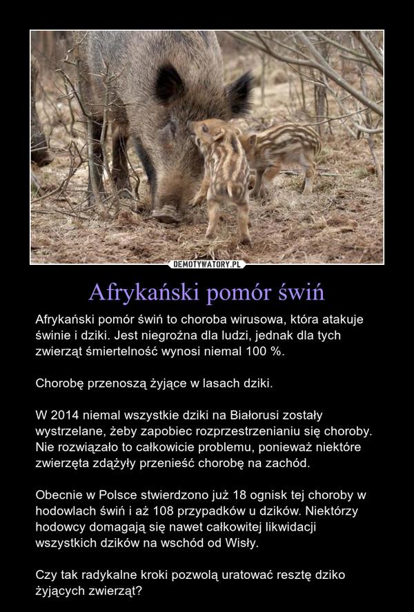 Afrykański pomór świń – Afrykański pomór świń to choroba wirusowa, która atakuje świnie i dziki. Jest niegroźna dla ludzi, jednak dla tych zwierząt śmiertelność wynosi niemal 100 %.Chorobę przenoszą żyjące w lasach dziki.W 2014 niemal wszystkie dziki na Białorusi zostały wystrzelane, żeby zapobiec rozprzestrzenianiu się choroby. Nie rozwiązało to całkowicie problemu, ponieważ niektóre zwierzęta zdążyły przenieść chorobę na zachód.Obecnie w Polsce stwierdzono już 18 ognisk tej choroby w hodowlach świń i aż 108 przypadków u dzików. Niektórzy hodowcy domagają się nawet całkowitej likwidacji wszystkich dzików na wschód od Wisły.Czy tak radykalne kroki pozwolą uratować resztę dziko żyjących zwierząt?
