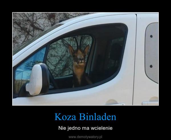 Koza Binladen – Nie jedno ma wcielenie