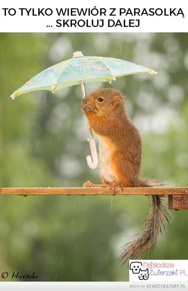 Wiewiór z parasolką –