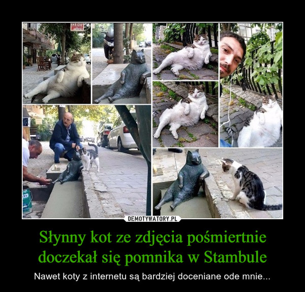 Słynny kot ze zdjęcia pośmiertnie doczekał się pomnika w Stambule – Nawet koty z internetu są bardziej doceniane ode mnie...