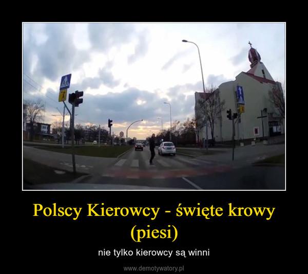 Polscy Kierowcy - święte krowy (piesi) – nie tylko kierowcy są winni
