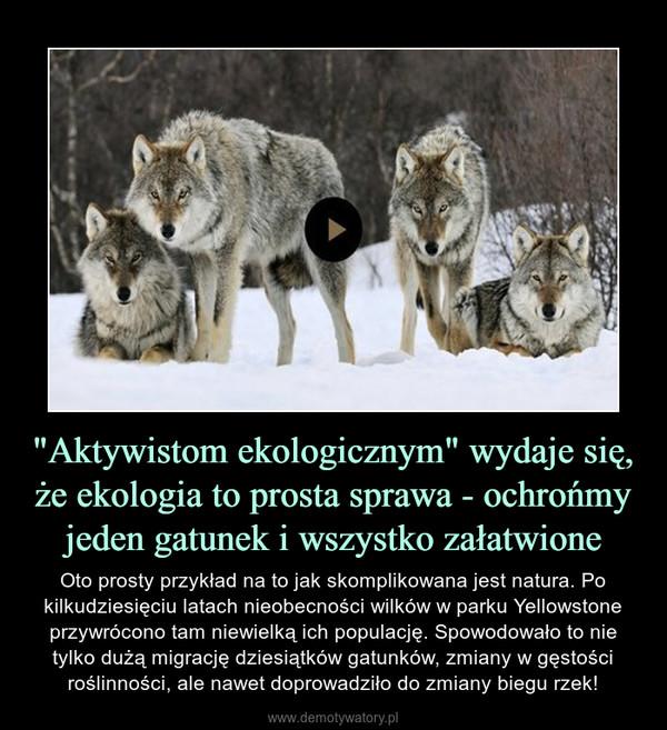 """""""Aktywistom ekologicznym"""" wydaje się, że ekologia to prosta sprawa - ochrońmy jeden gatunek i wszystko załatwione – Oto prosty przykład na to jak skomplikowana jest natura. Po kilkudziesięciu latach nieobecności wilków w parku Yellowstone przywrócono tam niewielką ich populację. Spowodowało to nie tylko dużą migrację dziesiątków gatunków, zmiany w gęstości roślinności, ale nawet doprowadziło do zmiany biegu rzek!"""