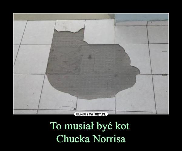 To musiał być kot Chucka Norrisa –