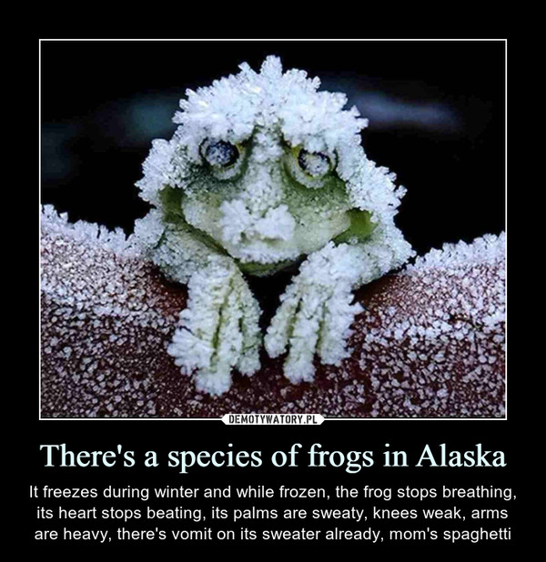 There's a species of frogs in Alaska – It freezes during winter and while frozen, the frog stops breathing, its heart stops beating, its palms are sweaty, knees weak, arms are heavy, there's vomit on its sweater already, mom's spaghetti