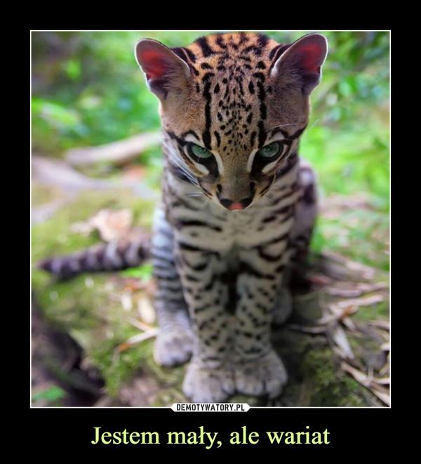 Jestem mały, ale wariat –