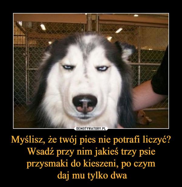 Myślisz, że twój pies nie potrafi liczyć? Wsadź przy nim jakieś trzy psie przysmaki do kieszeni, po czym daj mu tylko dwa –