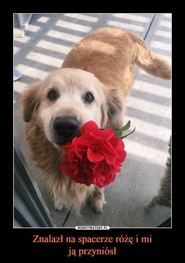 Znalazł na spacerze różę i miją przyniósł –