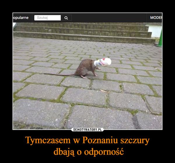 Tymczasem w Poznaniu szczury dbają o odporność –