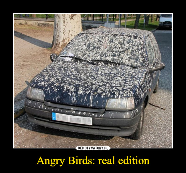 Angry Birds: real edition –