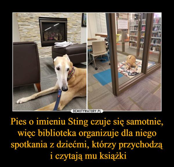 Pies o imieniu Sting czuje się samotnie, więc biblioteka organizuje dla niego spotkania z dziećmi, którzy przychodzą i czytają mu książki –
