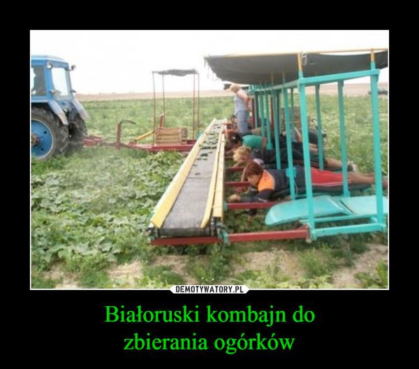 Białoruski kombajn dozbierania ogórków –