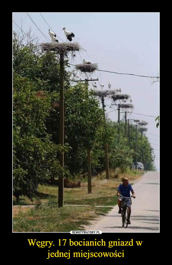Węgry. 17 bocianich gniazd w jednej miejscowości –