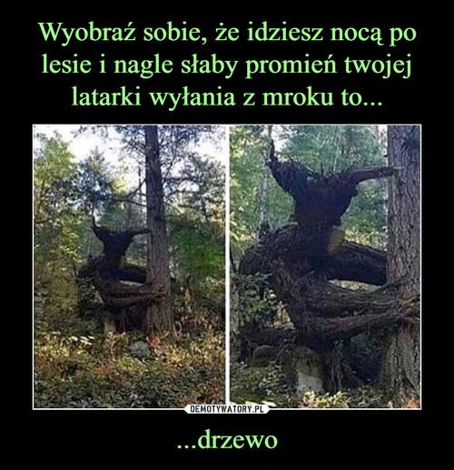 Wyobraź sobie, że idziesz nocą po lesie i nagle słaby promień twojej latarki wyłania z mroku to... ...drzewo